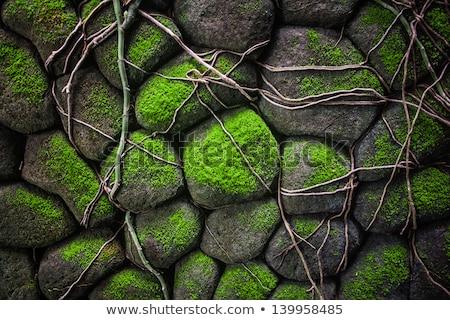Kő struktúra kő moha zöld fa Stock fotó © meinzahn