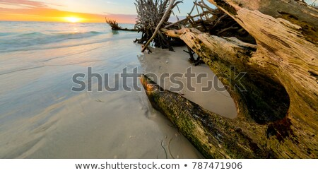 Drift Wood Sunset stock photo © rghenry