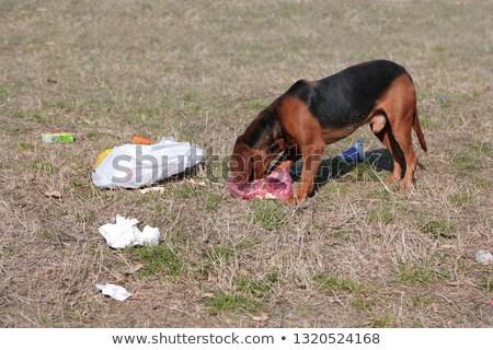 Yeme çöp yemek diyet simge Stok fotoğraf © Lightsource
