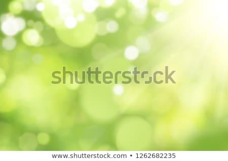 Nieve círculo verde bokeh círculos Foto stock © romvo