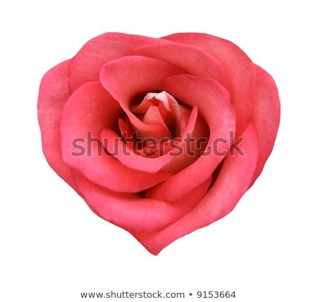 Ruby heart with roses Stock photo © blackmoon979