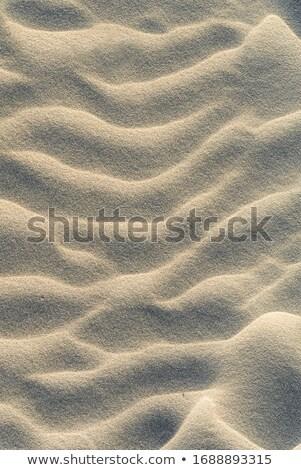 caribbean sand waves desert pattern background stock photo © lunamarina