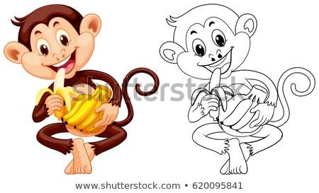 Tier Gliederung Affe essen Bananen Illustration Stock foto © colematt