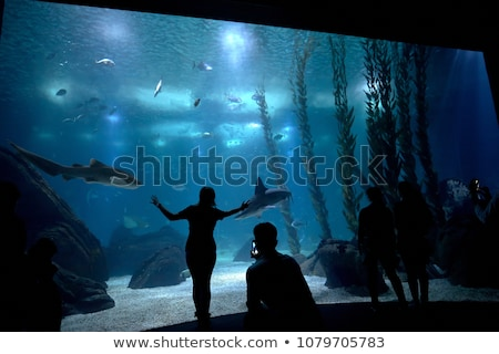 Onderwater wereld groep mensen kijken vis schoonheid Stockfoto © matimix