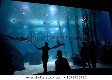 bezoekers · aquarium · illustratie · meisje · vis · glas - stockfoto © matimix