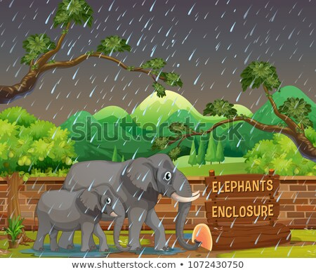 Zoo scene with elephants in rainy day Stock photo © colematt
