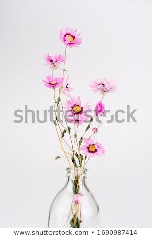 赤い花 ガラス 暗い 日 歳の誕生日 ストックフォト © Melnyk