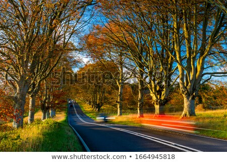 Autumn colours in the tree lined roads Stock photo © lovleah