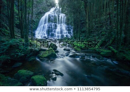 Nelson Falls, Tasmania Stock photo © THP