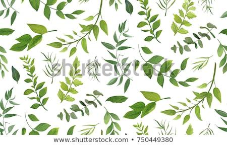 Padrão aquarela folhas verdes isolado branco papel Foto stock © ShustrikS