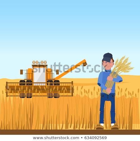 Gazda aratás búza ültetvény gazdálkodás férfi Stock fotó © robuart