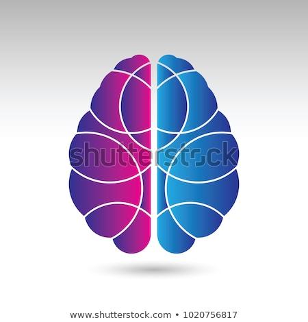 Cérebro humano símbolo cérebro anatomia vista lateral cor Foto stock © designer_things