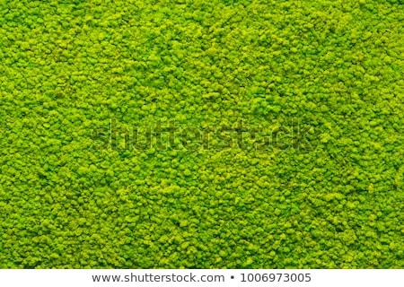 moss texture in closeup Stock photo © vladacanon