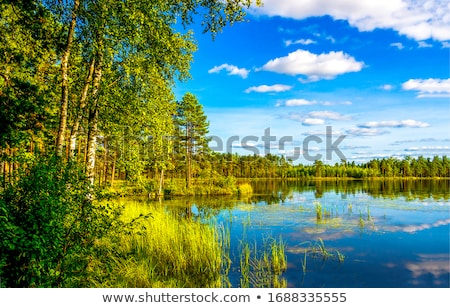 Erdő tó gyönyörű kék felhős égbolt Stock fotó © vrvalerian