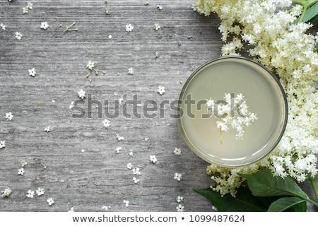 elderflower tea stock photo © joker