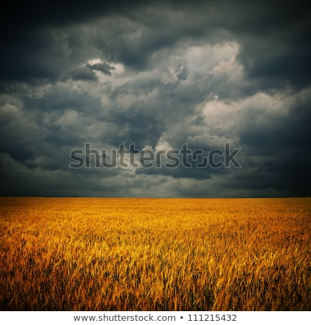 storm clouds over field stock photo © vlad_star