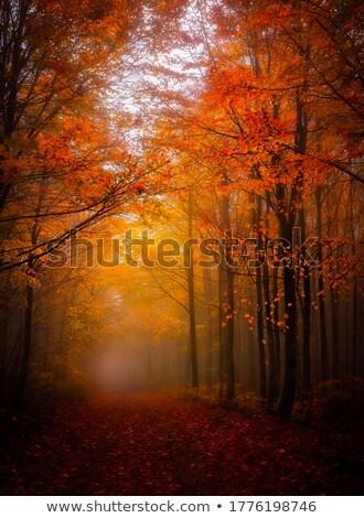 tajemniczy · świetle · mglisty · lasu · jesienią · niebieski - zdjęcia stock © hofmeester