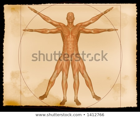 Parchment with Muscle Anatomy Stock photo © AlienCat
