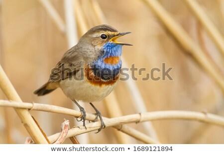 かわいい · 鳥 · 支店 · 音楽 · 幸せ · 葉 - ストックフォト © HASLOO