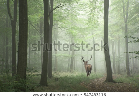 deer in forest stock photo © vwalakte