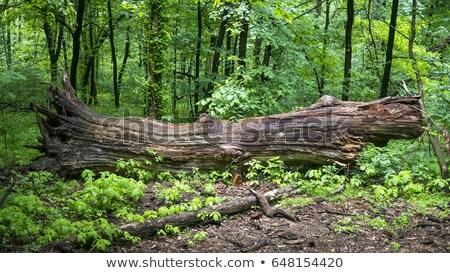 Boom bos gras hout natuur berg Stockfoto © ankarb