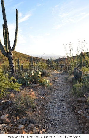Sonnenuntergang schönen grünen Arizona Himmel Landschaft Stock foto © meinzahn
