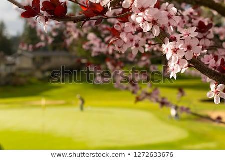 гольф весны пусто дерево трава гольф Сток-фото © CaptureLight