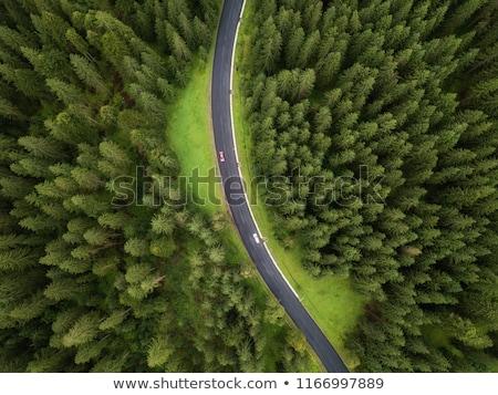 Vidéki út tavasz erdő Németország fű tájkép Stock fotó © haraldmuc