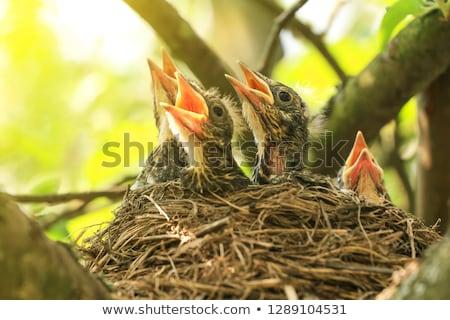 Bebê aves sem costura papel de parede tiras projeto Foto stock © sabelskaya