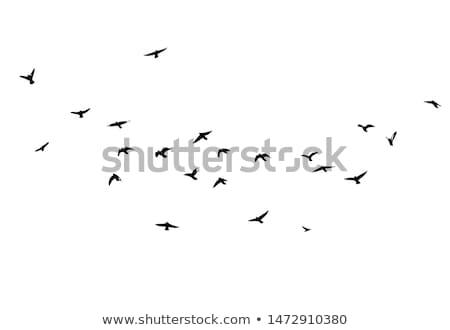 absztrakt · színes · madár · ikon · természet · jókedv - stock fotó © kiddaikiddee