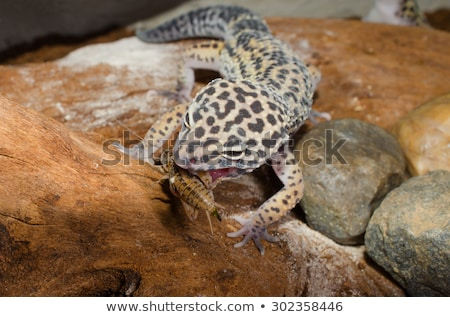 Leopard · reso · illustrazione · pelle - foto d'archivio © ecopic