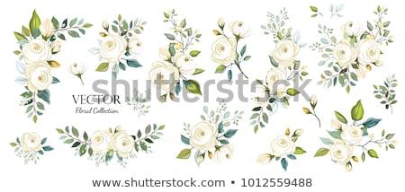 Flores brancas conjunto azul planta branco Foto stock © wime