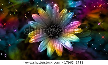 Africano margarida flor natureza jardim planta Foto stock © mroz