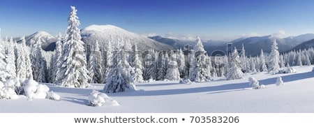 snow-covered trees winter day Stock photo © OleksandrO