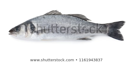 sea bass isolated stock photo © Antonio-S