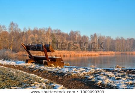 木製 ベンチ 森林 緑 木 空 ストックフォト © compuinfoto