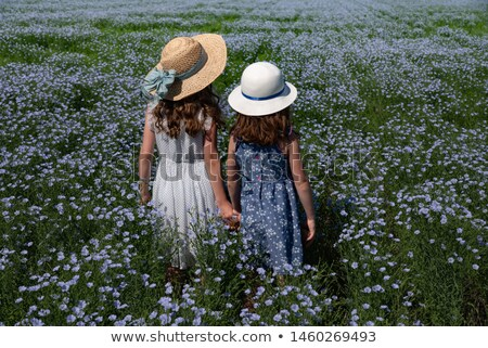 flax fields in Saskatchewan Stock photo © pictureguy