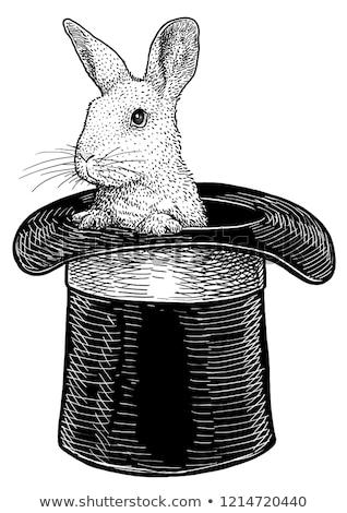 tavşan · şapka · yalıtılmış · beyaz · tavşan · siyah - stok fotoğraf © adrenalina