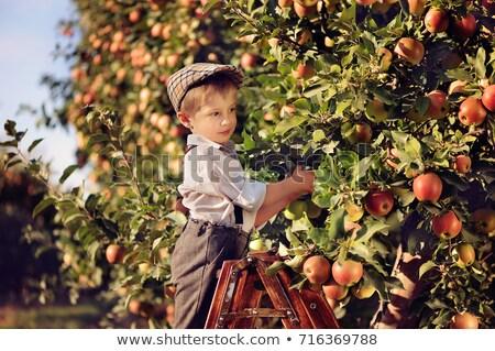 aratás · idő · dolgozik · búzamező · égbolt · étel - stock fotó © is2