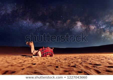 Deve çöl gece örnek doğa manzara Stok fotoğraf © bluering
