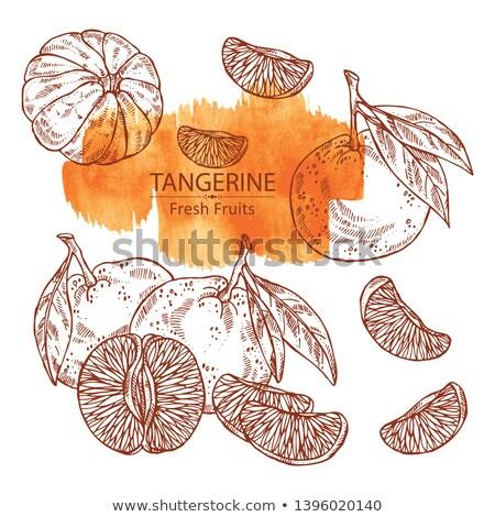 Frescos mandarina manos agricultor Foto stock © mythja