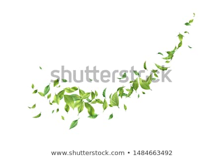 Abstract green summer background with whirlwind of leaves Stock photo © heliburcka