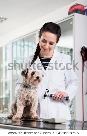 Small puppy in clinic for ear check-up Stock photo © Kzenon