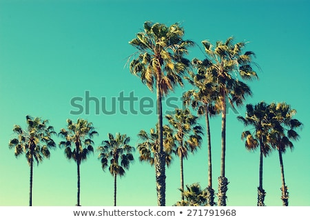 Palm tree with bright blue sky Stock photo © dariazu
