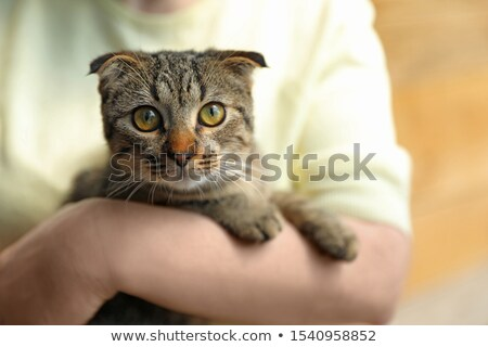 Woman holding cat on blurred background. Concept of volunteering Stock photo © dashapetrenko