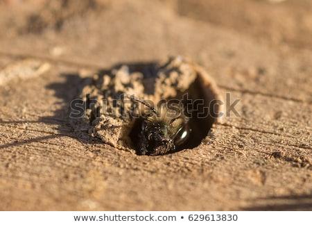 скучно каменщик человека стены технологий работник Сток-фото © photography33