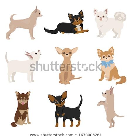 nove · cani · gruppo · cuccioli · tavola - foto d'archivio © cynoclub