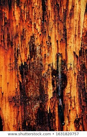 Rust and paint. stock photo © Pietus