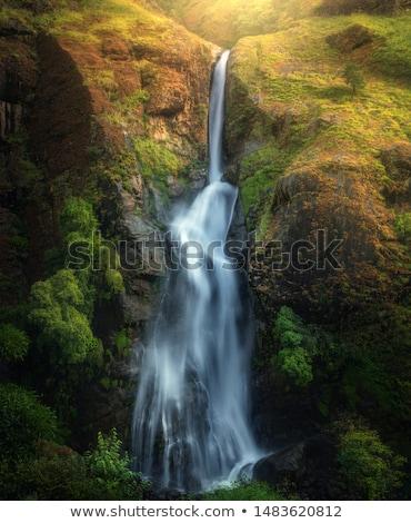 Zonnestraal groene bos water boom voorjaar Stockfoto © almir1968