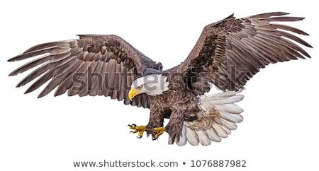 halcón · águila · sesión · árbol · naturaleza · belleza - foto stock © mikko